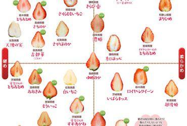 草莓正確吃法你知道嗎&日本草莓解析主流品種