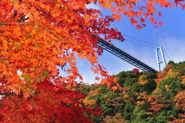 紅葉季▶海峽與紅葉的壯麗.龍神大吊橋紅葉盛開【茨城龍神峽】