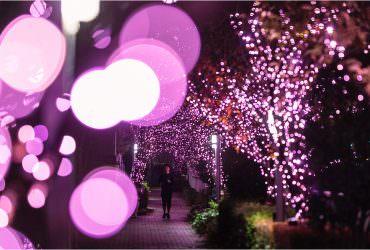 2018冬之櫻盛開!東京目黑川40萬顆櫻色LED齊綻放