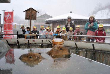 再冷也想去!精選日本冬季動物園Top10「真冬が楽しい動物園10選」