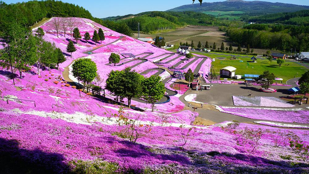 許妳一個粉紅世界!北海道5月限定【東藻琴芝櫻公園】賞花花期及園區照片
