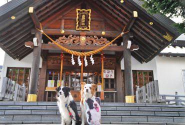 【札幌西野神社】種類豐富結緣御守!十二生肖安產與健康祈願,寵物毛小孩也OK!