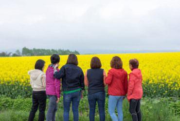享受春日黃色幸福之日本第一北海道油菜花海祭(たきかわ菜の花まつり)